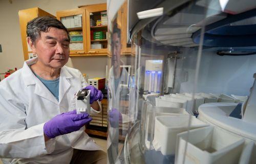 Scientist in d'Azzo's lab