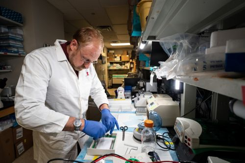Male scientist at work in the lab
