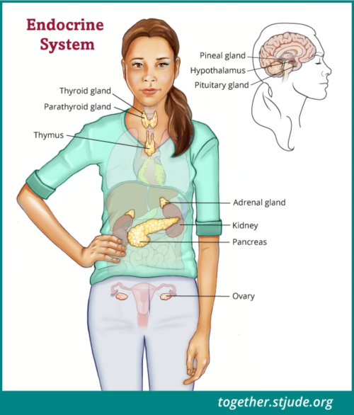 Life after craniopharyngioma may include problems with the endocrine system. The endocrine system is a group of glands that controls many of the body's functions such as growth, puberty, energy level, urine production, and stress response.
