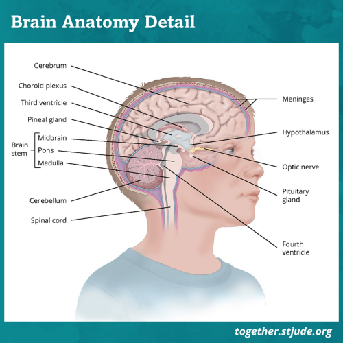 Tumors that begin in the brain are called primary brain tumors. They may spread to other areas of the brain or spinal cord, but they do not usually spread to other parts of the body.