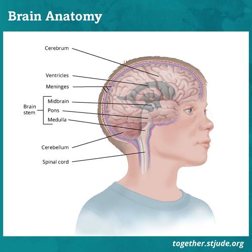 Gangliogliomas are a type of brain tumor that most often develop in the cerebrum.