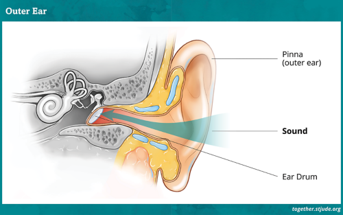 Diagram of the outer ear which includes the pinna and ear drum.