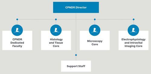 The Center for Pediatric Neurological Disease Research (CPNDR)