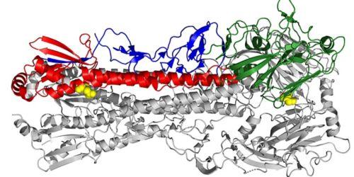 Electron microscopy image of an influenza virus