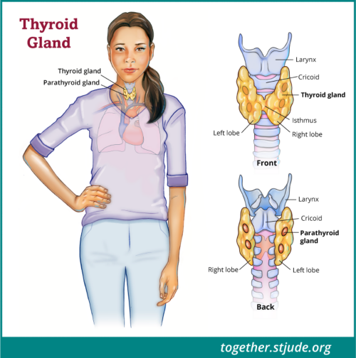 Thyroid Problems After Childhood Cancer Treatment Together