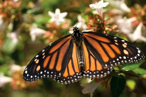 Una mariposa se posa en una flor.