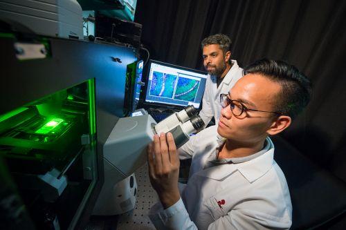 باحثو سرطان الأطفال وهم يستخدمون المجهر في المعمل