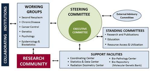 Organizational structure graphic