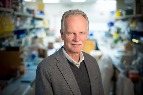 Gerard C. Grosveld, PhD