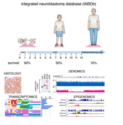graphic illustration of integrated neuroblastoma database