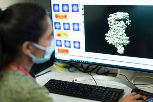 Digital image of artificial intelligence human brain