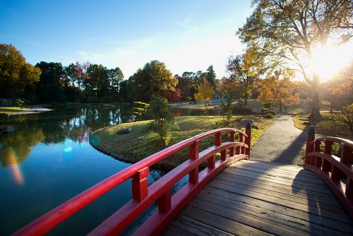 Red bridge in Japanese garden in late afternoon sun