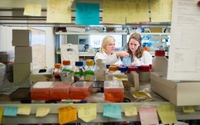 Stringent validation: Antibodies market is buyer beware for scientists