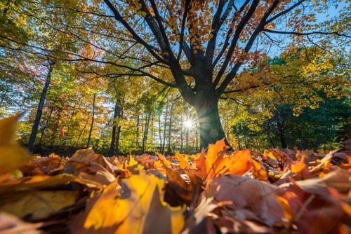 El sol brilla a través de las copas de los árboles en las hojas marrones y amarillas.