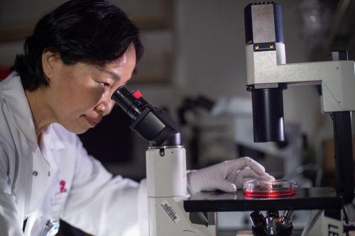 Zambetti Lab